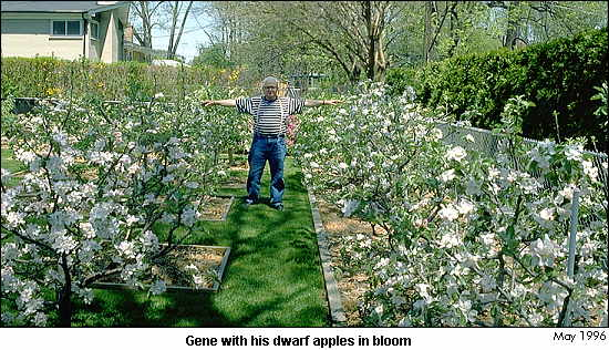Midfex Presents Gene S Backyard Orchard Introduction 97 Dwarf Apple Trees In 2500 Square Feet